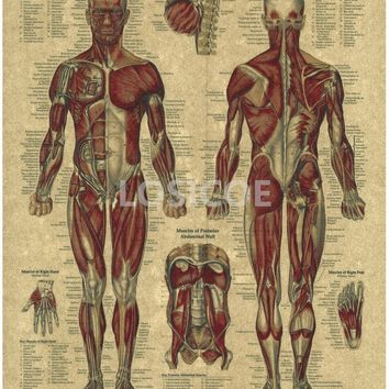 Vintage Medicine Human anatomy Posters Kraft Paper Painting Wall Sticker Print Art Hospital Classrooms Interior Decoration A7
