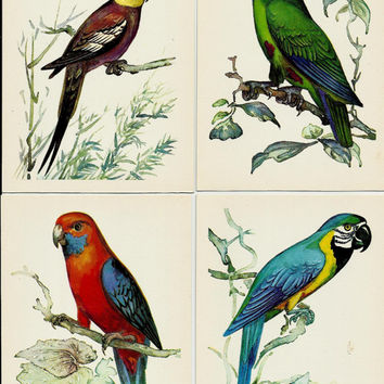 Parrots, Vintage Postcards Drawing set of 16, Illustrations of Birds by Albova unused 1981