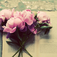 Peony book photograph- pink, vintage book, teal, romantic, rustic, cream, girly, for her,  fine art photo, summer, flower, floral,