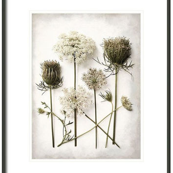 Large Wall Art, Queen Anne's Lace, Flower Photography, Spring Decor, Still Life Fine Art Photography, Botanical Print, Flower Study