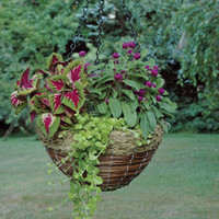 Specials - FERN & GREEN RATTAN BASKET