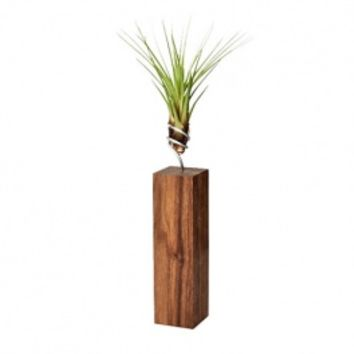 MONOQI | Tikal Air Plant - Walnut