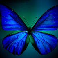 Butterfly Art Print by noirblanc777 | Society6