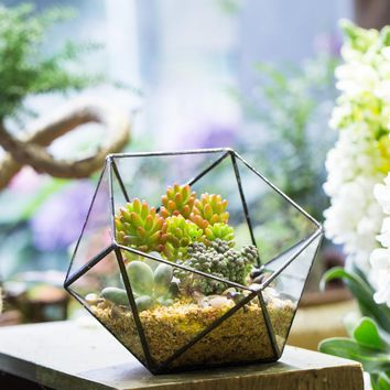 Tabletop Bowl Shape Geometric Glass Terrarium