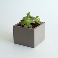"Light Grey Concrete Planter 3"" Square"