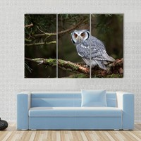The White Faced Scops Owl Canvas