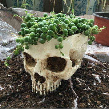 Skull Plant Pot | Very Realistic Skeleton Dead Human Planter | Shining Cactus Succulent Flower DIY Potted Desktop Balcony Vase Home Decor