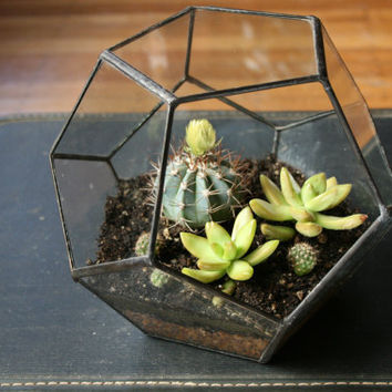 Tabletop Terrarium - Large Dodecahedron