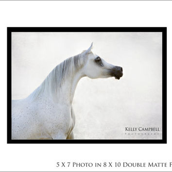 Amira Photo Print on Double Matted Frame/ Home Decor / House wear / Arabian Horse / Equine Photography /