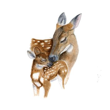 Mom and Baby Deer