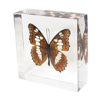 Commander Wingspan Butterfly Paperweight