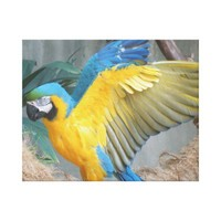 Macaw, bird, parrot, wings - Canvas Print