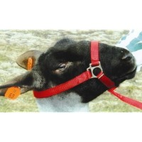 Sullivan Supply - Iowa - Nylon Sheep Halter