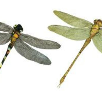 """12 Dragonfly Accents - 11 """" H"""