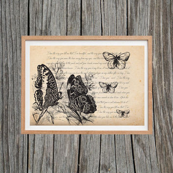 Vintage Butterfly Print Antique Wall Art
