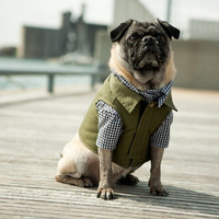 The Fieldworker Dog Vest