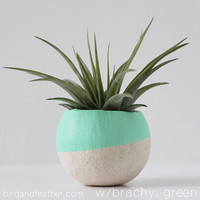 Mint Green Air Plant Pot with Air Plant