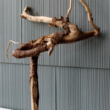 Driftwood Sculpture , Organic Beach House Art , Coastal Decoration