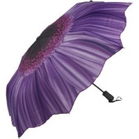 Amazon.com: Galleria Purple Daisy Folding Umbrella: Clothing