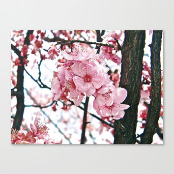 In Bloom Canvas Print by DuckyB (Brandi)