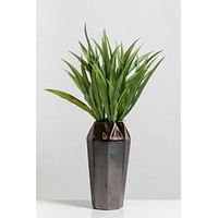 "22"" Grass in Ceramic Pot - Cacti Collection"