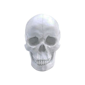 The Darwin | Faux Human Skull | White Resin