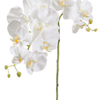 Phalaenopsis Orchids in White | Tropical Flowers | Easy Return Policy