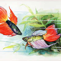 Siamese Fighting Fish (Artist L. Aristov) Vintage Postcard - Printed in the USSR, «Soviet Artist», Moscow, 1968