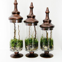 Apothecary Terrarium Set of 3 A Walk In the Forest by doodlebirdie