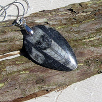 Fabulous Polished Orthoceras Fossil Pendant with Silver Plated Chain