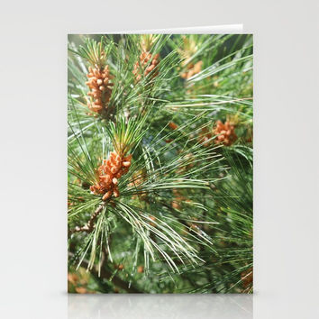 Budding Pine Cones Stationery Cards by Theresa Campbell D'August Art