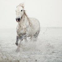 Horse photography, White horse running through water, Wall decor, Dreamy nature photography, Animal, Winter - Wild at Heart