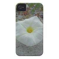 White Morning Glory on the Beach iPhone 4 Case-Mate Case