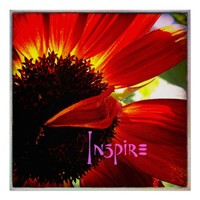 """Inspire"" Quote Red Orange Daisy Close-up Photo Poster"