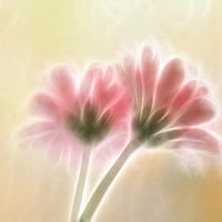 Flower photography, gerbera photograph fractal art floral wall decor pale pink summer wall art fine art print surreal photo print