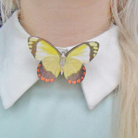 Cute Moth Insect Bug Butterfly Nature Entomology Collar Pin Badge Brooch