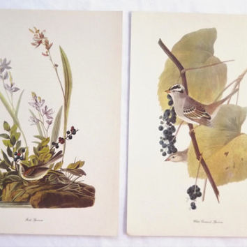 1940's Vintage Audubon Bird Prints Wall Hanging Set, Field Sparrow and White Crowned Sparrow, Original Large Sized