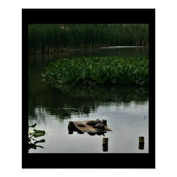 Turtles at the Refuge Poster
